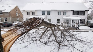 A felled tree is seen in front of a home in the north end of Halifax following a winter storm in Halifax on Saturday, January 30, 2016. (Darren Calabrese / THE CANADIAN PRESS)