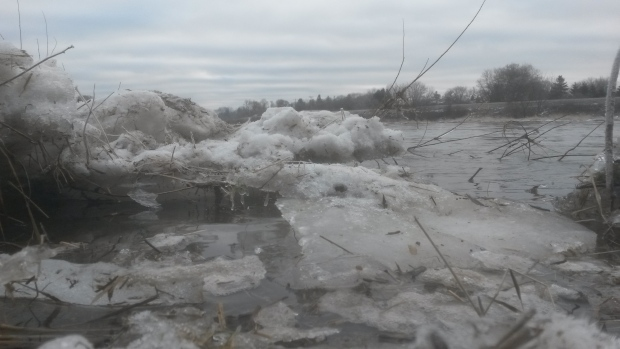 Melting ice is seen in the Grand River on Tuesday, Feb. 2, 2016. (Terry Kelly / CTV Kitchener)