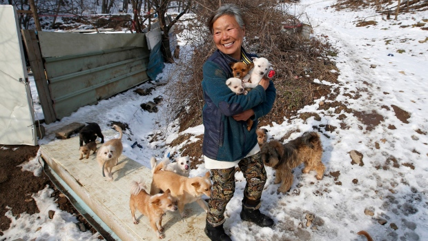 South Korean woman has been saving dogs from streets
