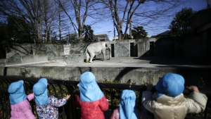 Children look at Hanako the elephant at Inokashira Park Zoo on the outskirts of Tokyo on Jan. 27, 2016. (AP / Eugene Hoshiko)