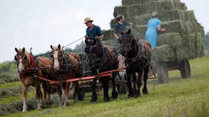 In this file photo, workers bale hay at an Amish farm on Friday, July 24, 2015, in Springfield, N.Y. (AP Photo / Mike Groll)