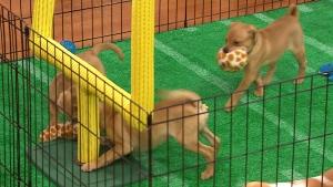 Canada AM: Puppy Bowl XII