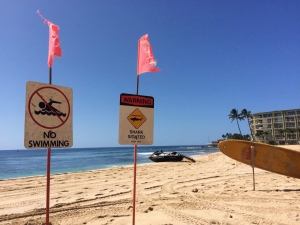 Signs warning of a shark sighting are posted at Makaha Beach Park in Waianae, Hawaii, Thursday, Oct. 29, 2015. (AP / Audrey McAvoy)