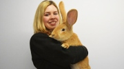Atlas, a seven-month-old continental giant rabbit from Scotland, is looking for a new home after his owners gave him away due to his size.