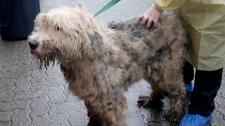 langley seizure dogs
