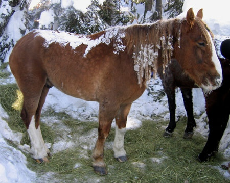 As word of the trapped horses spread, volunteers began showing up to help shovel. (Photo courtesy Birgit Stutz)