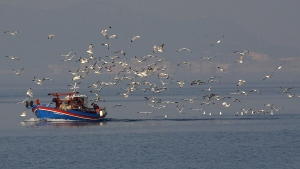 Seagulls fly above a fishing boat off the Greek island Samos north east of Athens, in Aegean sea, on Tuesday, Feb. 5, 2008. (AP Photo / Petros Giannakouris)