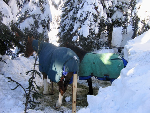 Two horses found trapped by snow near McBride, B.C. have now been rescued. (Courtesy Birgit Stutz)