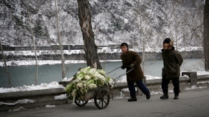 A boy pushes a cart of cabbage along a main road in Hyangsan County, North Pyongan Province, about 130 kilometers (80 miles) from the capital of Pyongyang, North Korea on Dec. 3, 2015. (AP /Wong Maye-E)