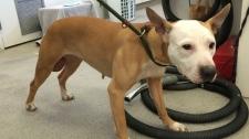 Dog found by Humane Society