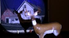 Spotlight hunting