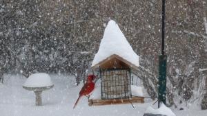 Snowfall Ottawa