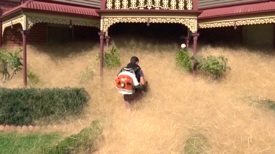 "A man uses a leaf blower to clear ""Hairy Panic"" tumbleweed at a home in Wangaratta, Australia, in Feb. 2016."