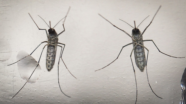 First positive test for West Nile virus in Toronto