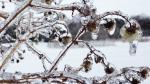 Ice Blankets Captial Region