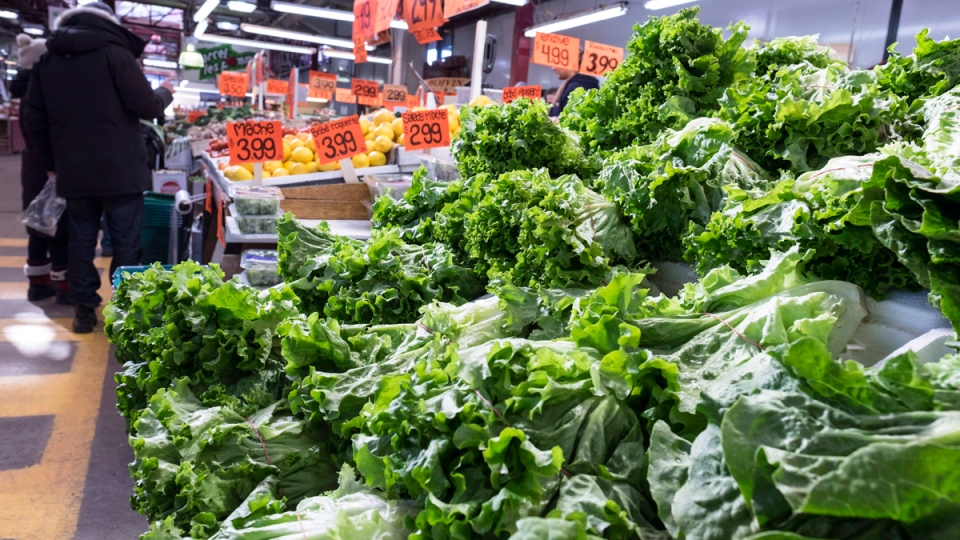 Lettuce on display at the Jean Talon Market in Montreal on January 11, 2016 . (Paul Chiasson / THE CANADIAN PRESS)
