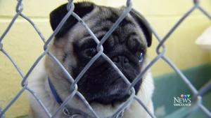 Dog breeder loses bid to appeal cruelty conviction