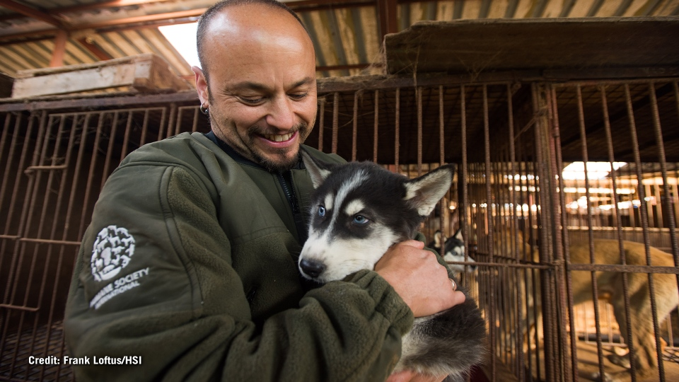 A worker holds a dog rescued from a farm in South Korea. Image courtesy: Frank Loftus/Humane Society International