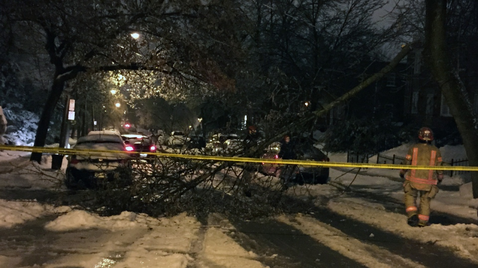 A tree fell early Thursday morning on Dezery St. (CTV Montreal/Cosmo Santamaria)