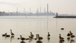 Canadian geese sit on the St.Clair River near the Imperial Oil refinery in Sarnia, Ont., on Friday, Oct. 5, 2007. (THE CANADIAN PRESS/Jacques Boissinot)