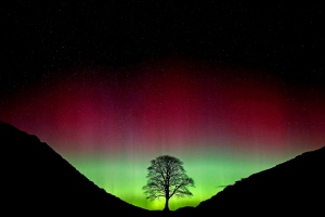The Northern Lights, or Aurora Borealis, shine over the Sycamore Gap at Hadrian's Wall in Northumberland, northeast England early Monday March 7, 2016. (Owen Humphreys/PA via AP)