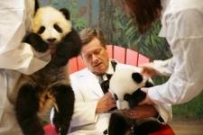 Toronto Mayor John Tory meets pandas