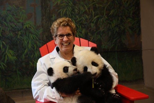 Ontario Premier Kathleen Wynne met the Toronto Zoo's panda cubs on Monday, March 7, 2016.