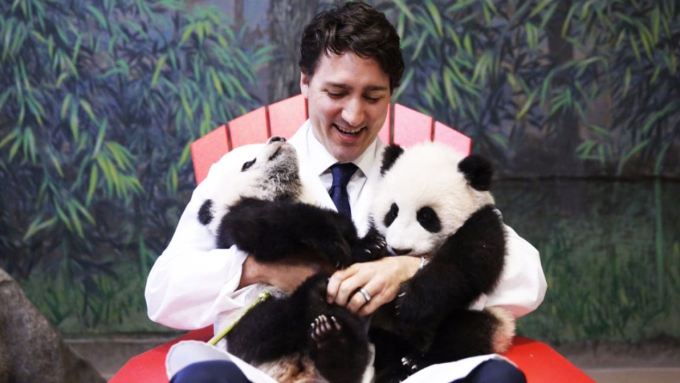 Prime Minister Justin Trudeau tweeted this photo on Monday, March 7, saying 'Today I had the pleasure to unveil the names of @TheTorontoZoo's panda cubs! Say hello to Jia Panpan & Jia Yueyue.'