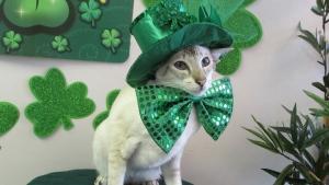 Irish Pets