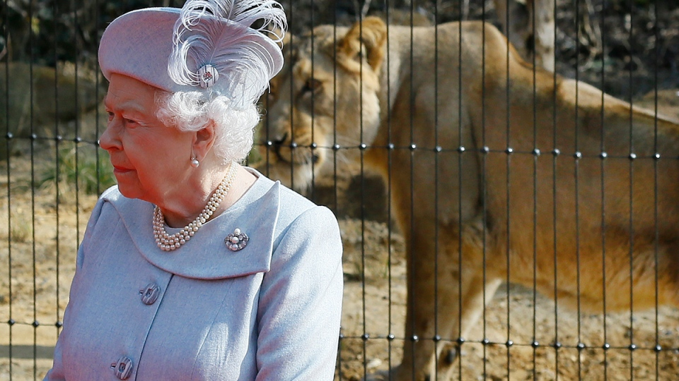 Queen Elizabeth II stands in front of an Asiatic lioness during a visit to officially open the new Land of the Lions, at London Zoo, Thursday, March 17, 2016. (AP / Kirsty Wigglesworth)