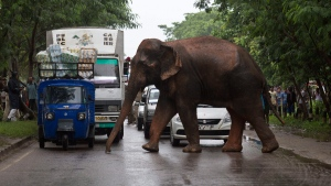 Commuters stop their vehicles and watch a wild male elephant on the outskirts of Gauhati, India, on Aug. 20, 2015. (Anupam Nath / AP)