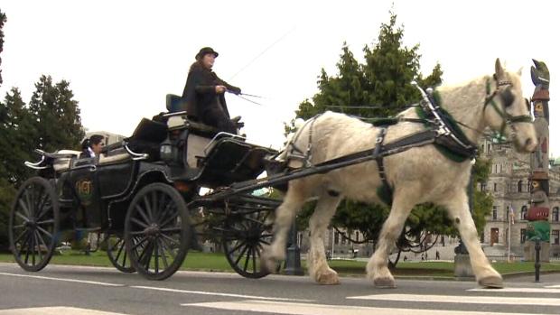 A horse-drawn carriage in Victoria, B.C.