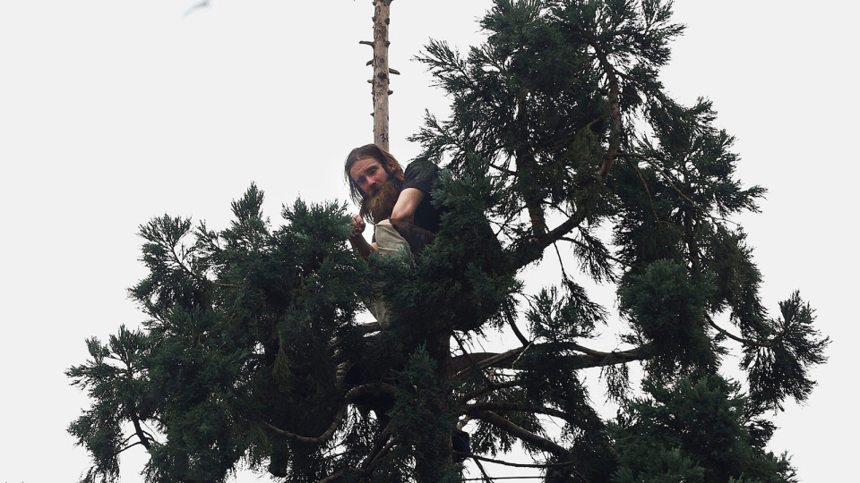 A man sits in an 80-foot tall tree in downtown Seattle, Tuesday, March 22, 2016, after he climbed nearly to the top, disrupting traffic. (Grant Hindsley/seattlepi.com via AP)