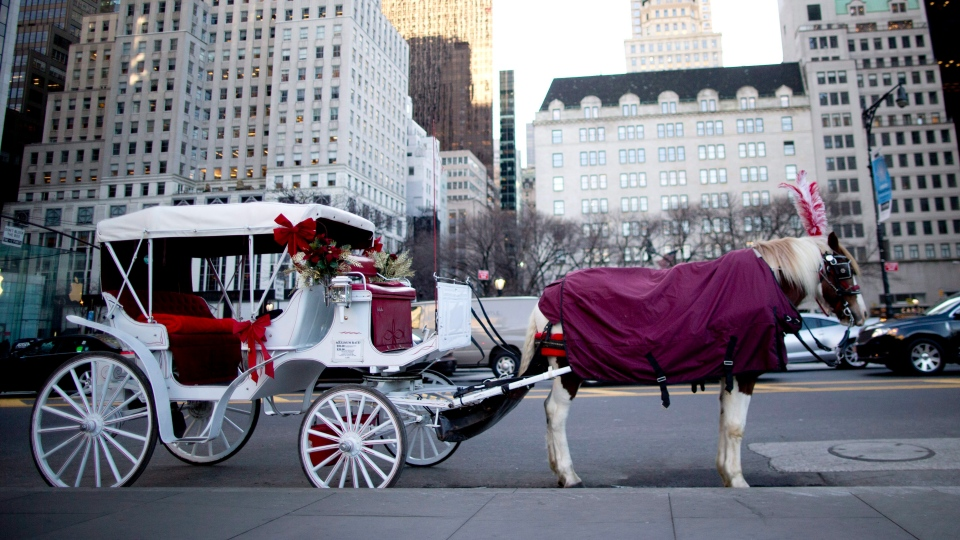 In this Wednesday, Jan. 13, 2016, photo, a carriage horse is covered in a blanket as it waits for customers on Central Park South in New York. (Mary Altaffer / AP Photo)
