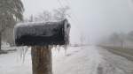 An ice-covered mailbox is seen near New Hamburg during stormy weather on Thursday, March 24, 2016. (Dan Lauckner / CTV Kitchener)