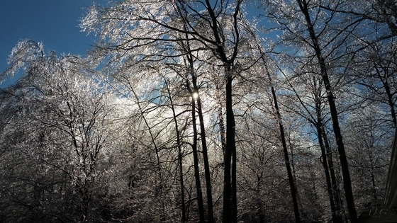 MyNews contributor  Reid McNabb Elmira, ON, CA says 'The sun through the trees after icecstorm.'