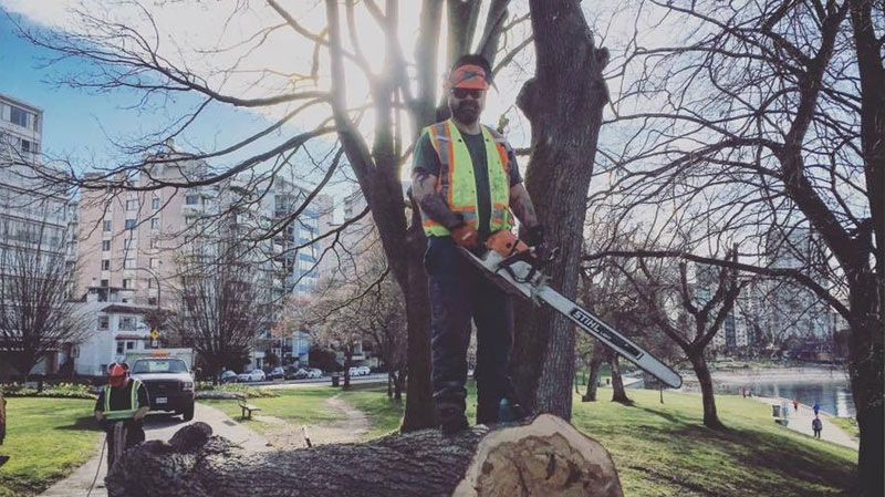 Barber chair' wood split hints at cause of Vancouver arborist's