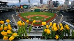 Tulips frame the field at PNC Park and the skyline of downtown Pittsburgh as pre-season preparations continue Friday, April 1, 2016. (AP Photo / Gene J. Puskar)