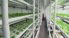 Eden Urban Farms