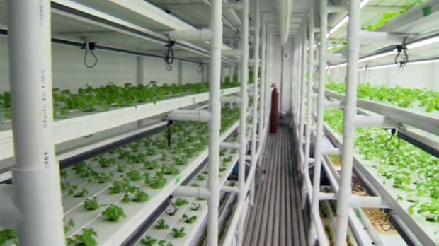What was once a shipping container now produces a variety of herbs and vegetables inside a southeast warehouse