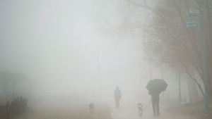 People walk their dogs on the beach during a foggy rainy day in Toronto. (THE CANADIAN PRESS/Nathan Denette)