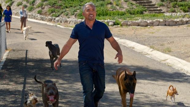 Dog Whisperer Walking On Leash Episode