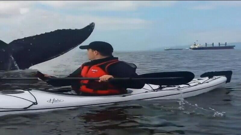 Two kayakers who set out to spot a humpback whale in English Bay say they got more than they bargained for. (YouTube)