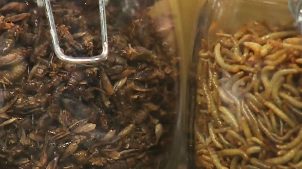 Canada AM: Turning bugs into tasty treats