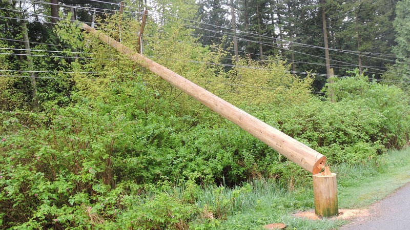 BC Hydro said four power poles were cut down with a chainsaw overnight in Surrey, triggering an outage for thousands of customers. April 13, 2016. (Handout)