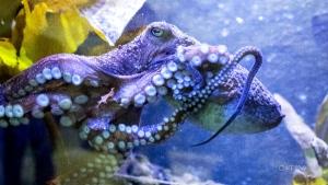 CTV National News: Clever underwater contortionist
