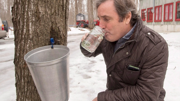 Louis-Robert Handfield, owner of Domaine Handfield sugar shack, samples some of the first maple sap of the season, Thursday, March 10, 2016 in Saint Marc-sur Richilieu, Que.(THE CANADIAN PRESS/Ryan Remiorz)