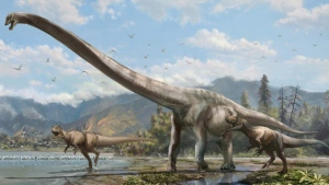 In this file image, dinosaurs are shown in a University of Alberta handout photo. A new study says dinosaurs were in decline long before an asteroid strike polished them off about 66 million years ago. (THE CANADIAN PRESS / HO-University of Alberta)