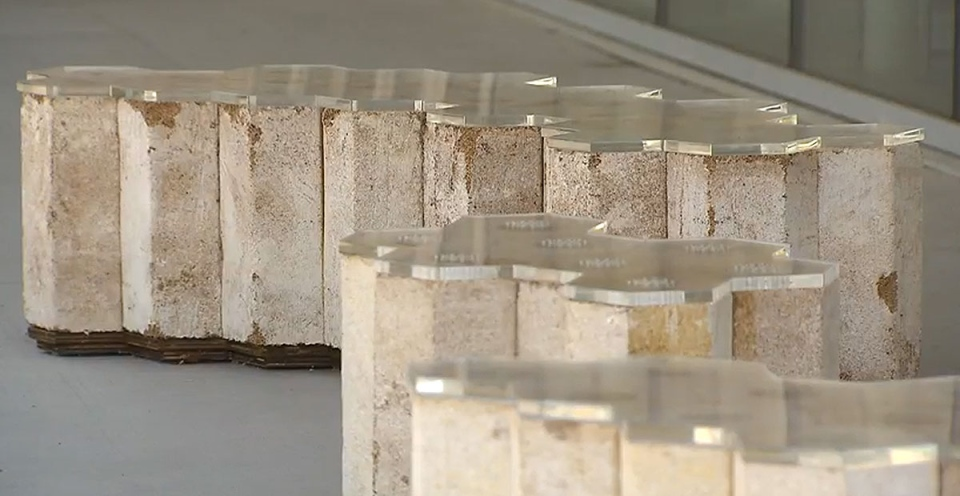 Joseph Dahmen and his partner Amber Frid-Jimenez are behind an innovative design project that saw six benches made from mycelium, the vegetative body of a fungus, installed on the University of British Columbia's campus.