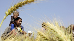 An Egyptian farmer carries his daughter in front of wheat crops on his land in Kafr Hamouda village, in Zagazig, 100 kilometres northeast of Cairo, Egypt on Monday, April 11, 2016. (AP / Amr Nabil)